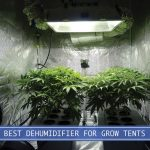 grow room with dehumidifier