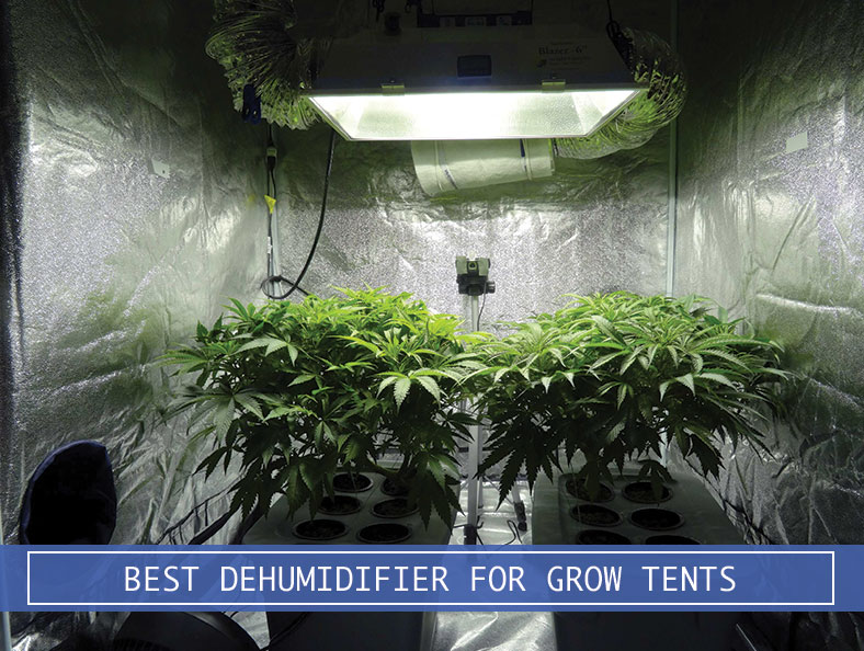 grow room with dehumidifier & Best Dehumidifier for Grow Tents and Plants Review from Amazon
