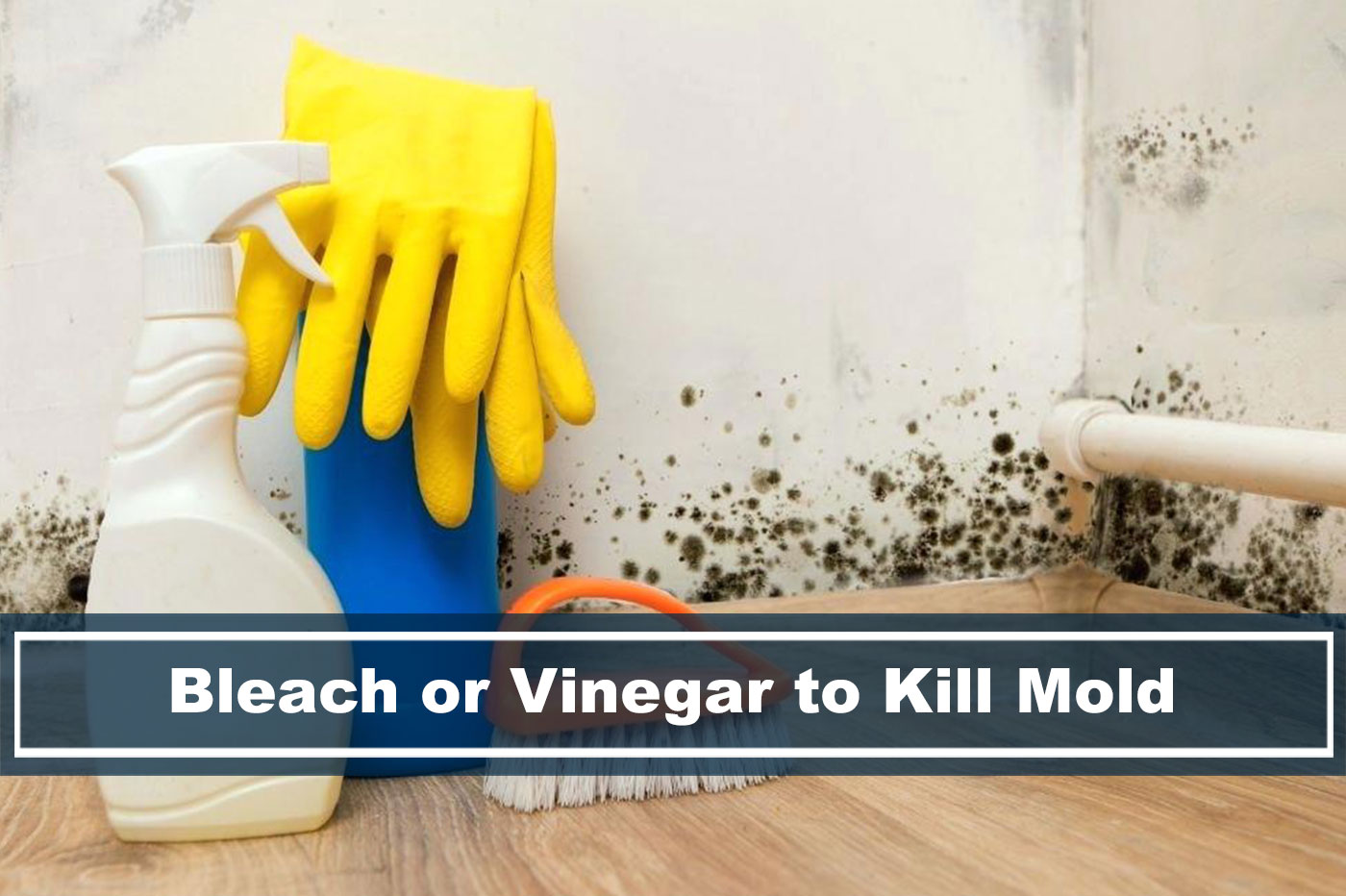 which is better? Bleach or Vinegar to killing mold?